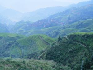 Rice terraces at sunrise