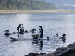 Cormorant fishing, Yangshuo