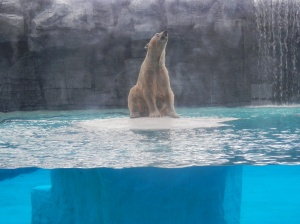 Awesome polar bear