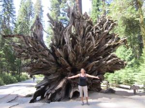 A big ol tree